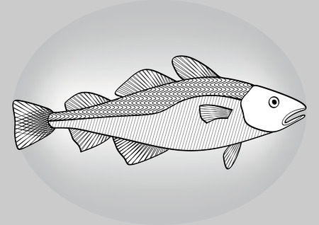 cod liver: Cod, black and white hatched drawing a gray gradient background Illustration
