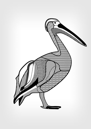water bird: Pelican, black and white drawing of water bird with hatched and patterned body parts. Isolated animal on gray gradient background. Template for tattoo, emblem, zoo, club,