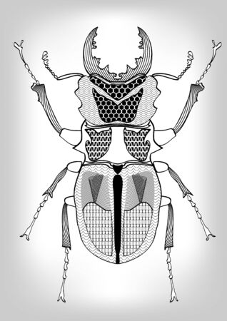 Stag-beetle, black and white drawing of beetle decorated with patterns.  Symmetric drawing, isolated insect on gray gradient background, useful as decoration, tattoo template, emblem