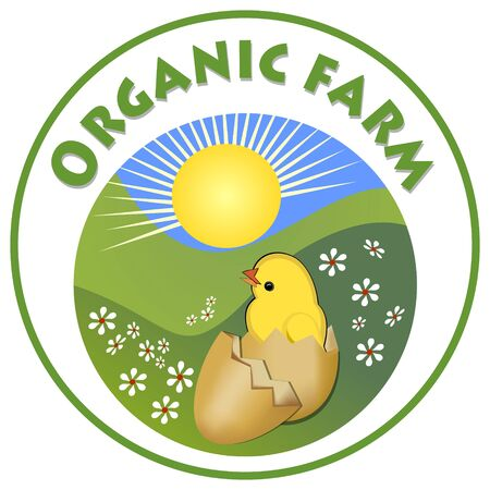 ecologic: Organic farm signboard, cute yellow chick in in egg-shell on green meadow in circle shape, emblem for natural products from countryside ecologic poultry breeding farm