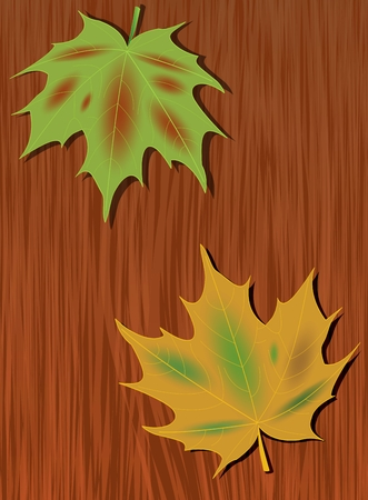 Colored maple leaves in the background of dark wood. Autumn background with nature motif. Green and yellow maple leaf. Vector EPS 10