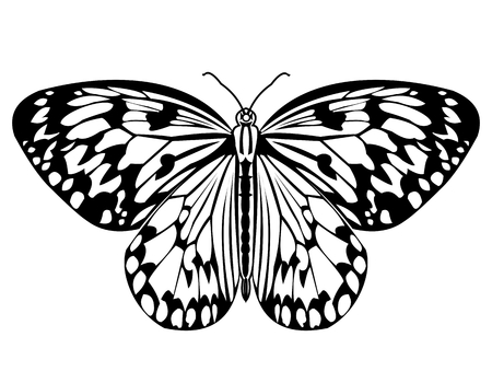 Butterfly, monochrome drawing in black and white, isolated tropical butterfly on white background, vector illustration Ilustrace