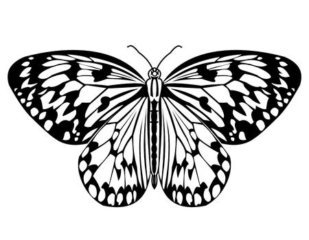 Farfalla, disegno monocromatico in bianco e nero, farfalla tropicale isolata su sfondo bianco, illustrazione vettoriale Vettoriali