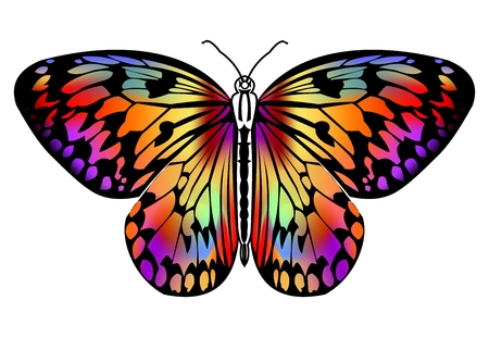 Butterfly drawing in vivid colors in black outline, isolated tropical butterfly on white background, decorative stylized design element, vector illustration