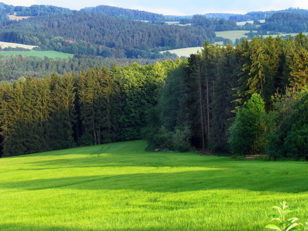Green meadow in rural hilly landscape, country with green meadow in summer, forest, Czech republic