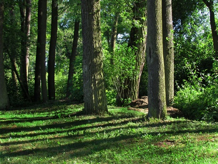 Afternoon forest, still life with sun-shining trees and long shadows,