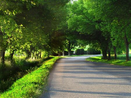 Road in tree alley, sunny early evening