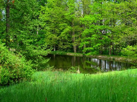 Natural still life with little pond surrounded by trees, water surface mirror, green meadow in front