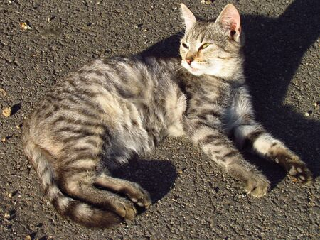 Cute tabby kitten with long shadow lying and basking on the road