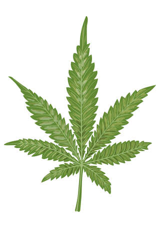 Isolated leaf of cannabis on a white background. Marijuana as a medicine. Suitable for the design of packaging for medicinal products from hemp, such as hemp ointment, hemp shampoo.