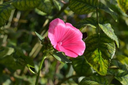 scarlet flower Фото со стока