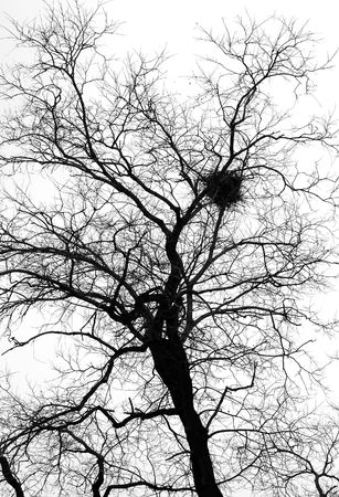 silhouette of the tree with the nest against a sky background. black and white photo