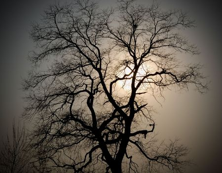barren: silhouette of the old tree with the nest against a sun and a sky background Stock Photo