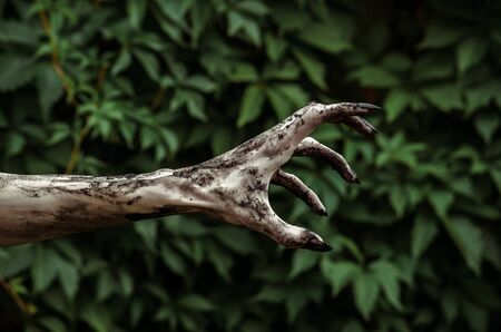 walking corpse: Horror and Halloween theme: Terrible zombie hands dirty with black nails reaches for green leaves, walking dead apocalypse studio