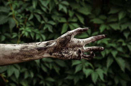 terrible: Horror and Halloween theme: Terrible zombie hands dirty with black nails reaches for green leaves, walking dead apocalypse studio