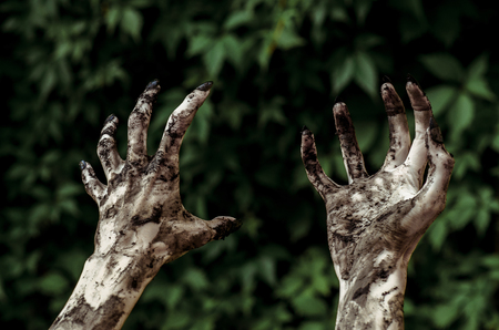 rising dead: Horror and Halloween theme: Terrible zombie hands dirty with black nails reaches for green leaves, walking dead apocalypse, first-person view studio