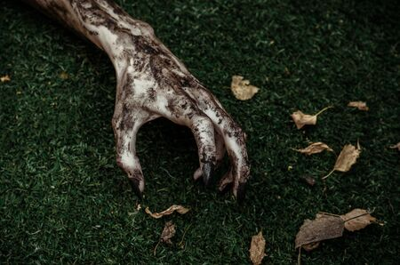 rising dead: Horror and Halloween theme: Terrible zombie hands dirty with black nails lie on the green grass, the walking dead apocalypse, top view studio