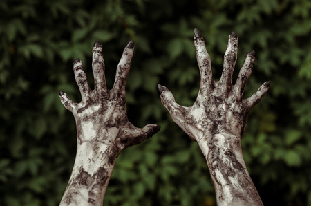 walking corpse: Horror and Halloween theme: Terrible zombie hands dirty with black nails reaches for green leaves, walking dead apocalypse, first-person view studio