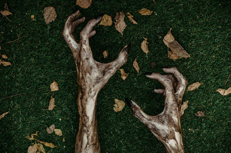 walking corpse: Horror and Halloween theme: Terrible zombie hands dirty with black nails lie on the green grass, the walking dead apocalypse, top view studio