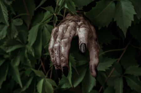 terrible: Horror and Halloween theme: terrible dirty hand with black fingernails zombie crawls out of green leaves, walking dead apocalypse studio