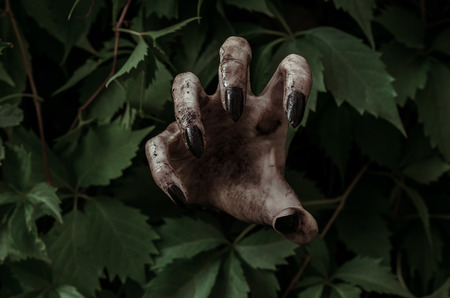 rising dead: Horror and Halloween theme: terrible dirty hand with black fingernails zombie crawls out of green leaves, walking dead apocalypse studio
