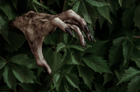 walking corpse: Horror and Halloween theme: terrible dirty hand with black fingernails zombie crawls out of green leaves, walking dead apocalypse studio