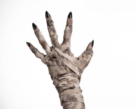 walking corpse: Halloween theme: terrible old mummy hands on a white background