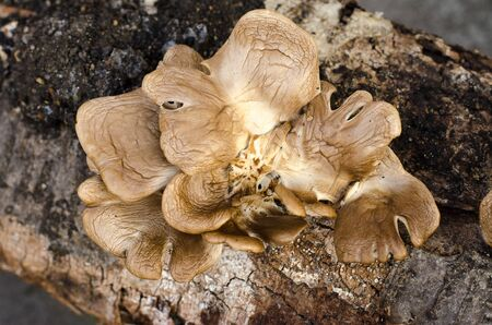 outgrowth: The fungus grows on a tree, a tree and a mushroom studio