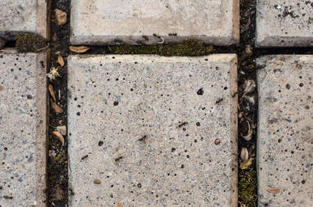 creep: Insects topic: ants creep on a pavement slab in the garden studio Stock Photo