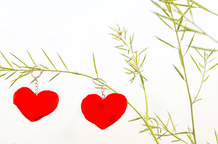 Valentine love symbol hanging on a tree isolated in white background
