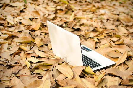 White Laptop lying on dry leaves outdoor garden in sunny day of a winter morning