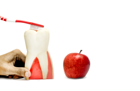 Patient education with dental model and fresh apple isolated in white background Standard-Bild