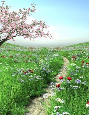cerisier fleur: Pathway avec un arbre de fleurs de cerisier