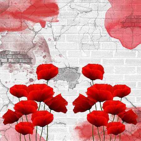 poppy flowers: poppies composition on a grunge urban wall  Stock Photo