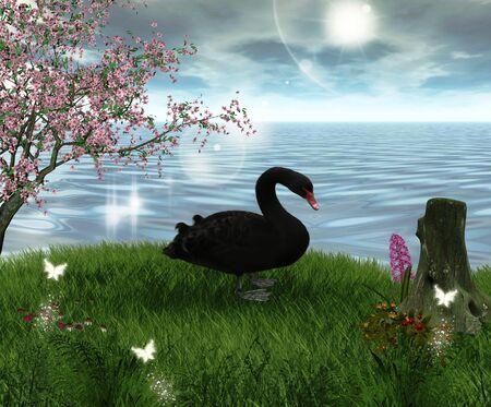 black swan: Black swan
