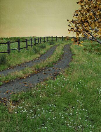 dode bladeren: Herfst pad