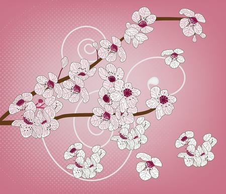 peach blossom: cherry blossom - artistic branch