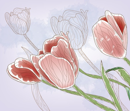 tulips  Illustration