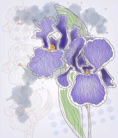 Iris 版權商用圖片 - 11812985
