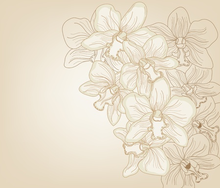 hand drawn orchid composition Vector