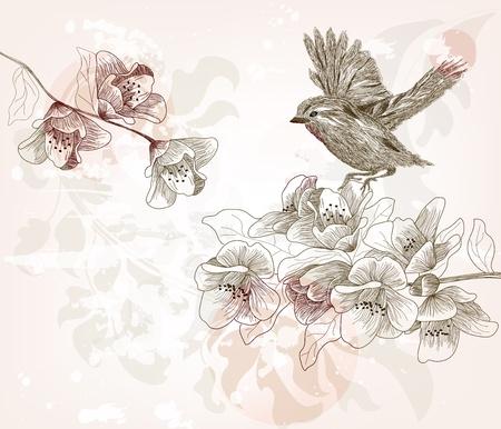 복숭아: 손으로 그린 봄 현장