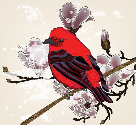 beautiful picture with bullfinch and magnolia branch Vector