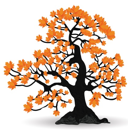 maple tree Stock Vector - 12813001