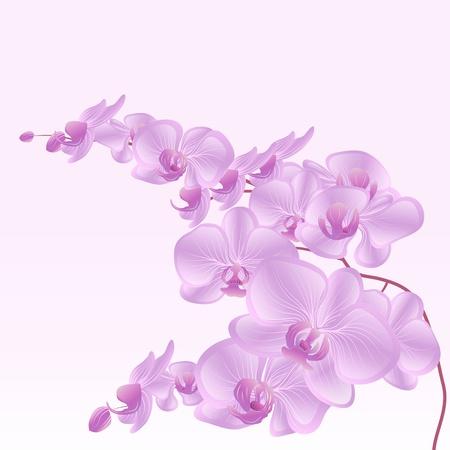 elegant orchid branch Vector