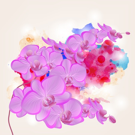 orchid branch on a grunge watercolors background  Vector