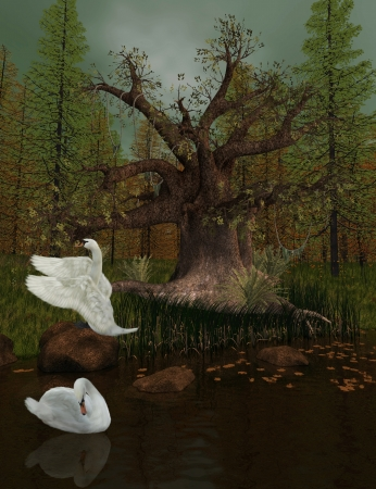 foreshortening: Lake with swans and big oak