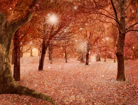 autumnal: Fantasy autumnal forest Stock Photo