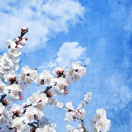 Grunge composition with apricot flowers photo