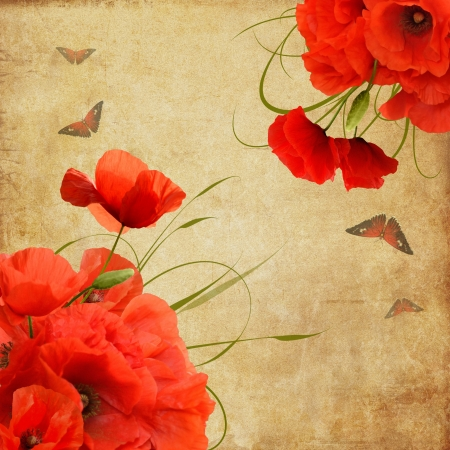 Vintage composition with poppies and butterflies photo