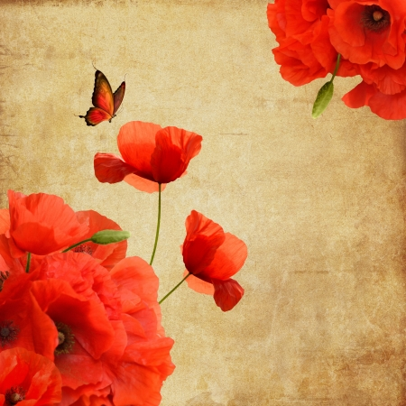 amapola: Amapolas composición romántica con la mariposa y el espacio para el texto